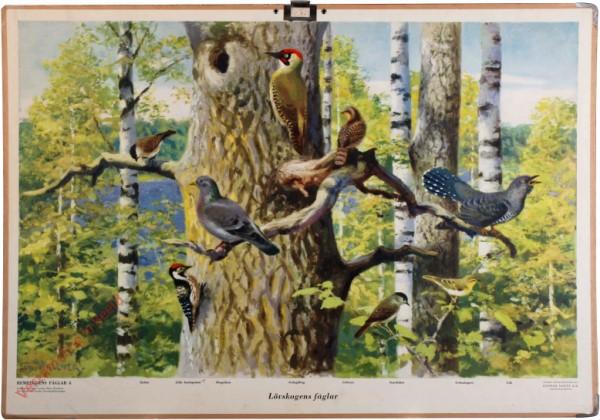 4 - Lövskogens fåglar [Zweeds]