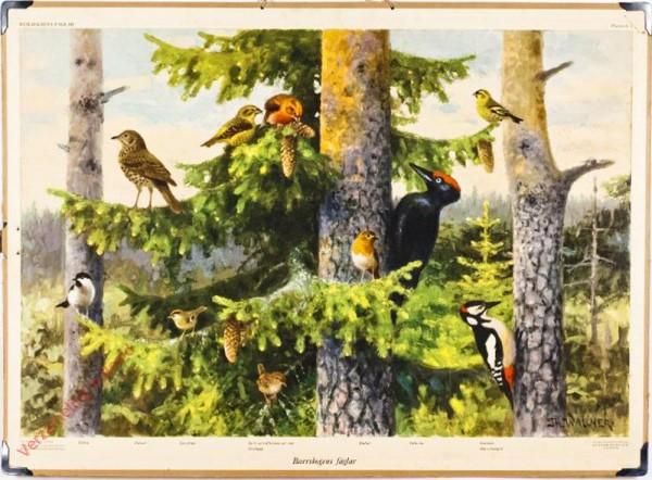5 - Barskogens fugler [Zweeds]
