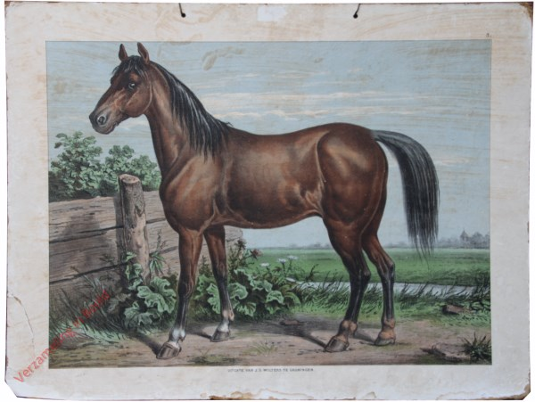 1e serie No. 3 - Het Paard