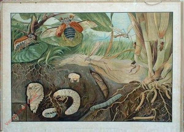 1e Serie, 4 - Gedaanteverwisseling van aardrups en veenmol; millioenpooten; slakken