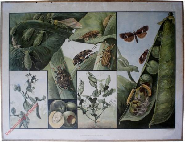 1e Serie, 6 - Erwtenvijanden, zoals erwtenkever, bladrandkever, erwtenbladroller, erwtenbladluis