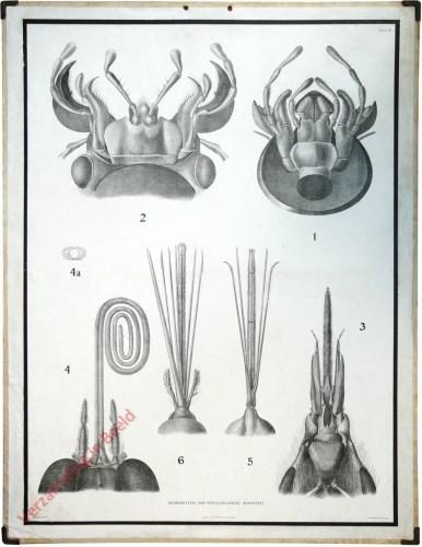 2e Serie, 12 - Monddeelen van verschillende insekten (kever, krekel, honingbij, vlinder, wants, steekmug)