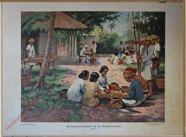 15 - Muskaatnotenbedrijf op de Banda-eilanden. Molukken