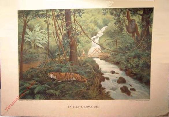 Eerste serie, no. 4 - In het oerwoud