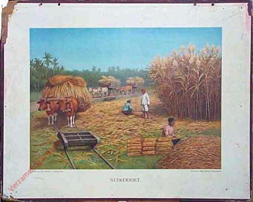 Eerste serie, no. 5 - Suikerriet
