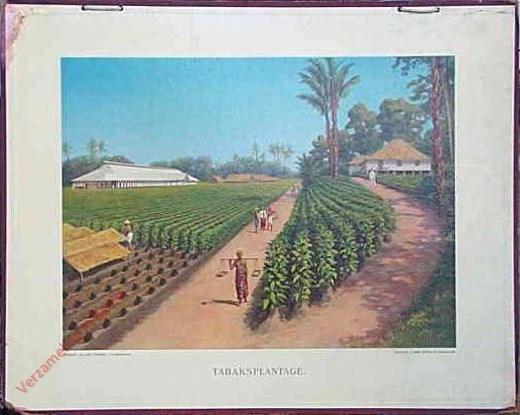Eerste serie, no. 6 - Tabaksplantage