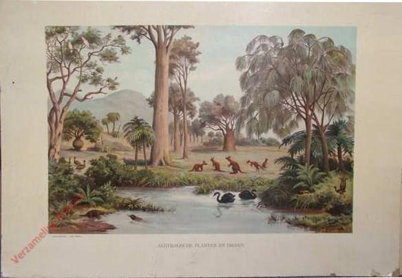 3e serie, VI - Australische planten en dieren