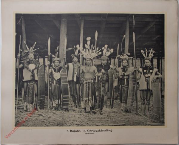 14 - Dajaks in oorlogskleeding. (Borneo).