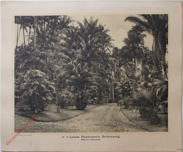 26 - s Lands Plantenhuis. Palmen-afdeeling.