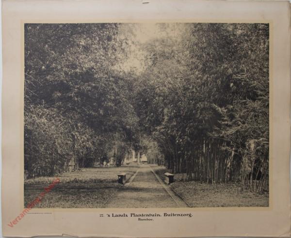 27 - s Lands Plantenhuis. Bamboe