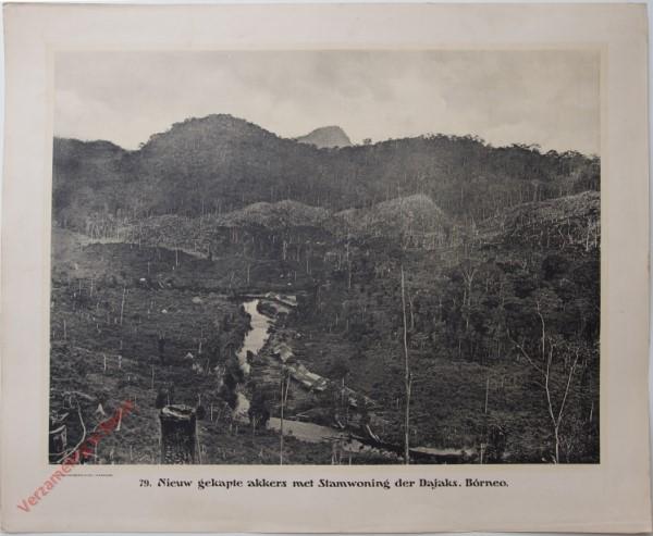 79 - Nieuw gekapte akkers met Stamwoning der Dajaks. (Bórneo)