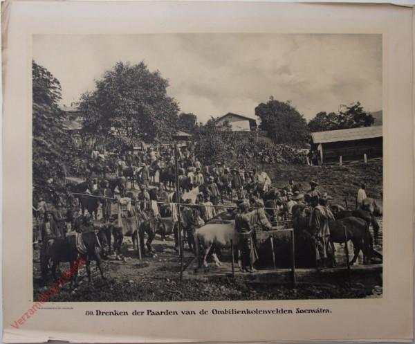 80 - Drenken der paarden van de Ombilien kolenvelden. (Soemátra)