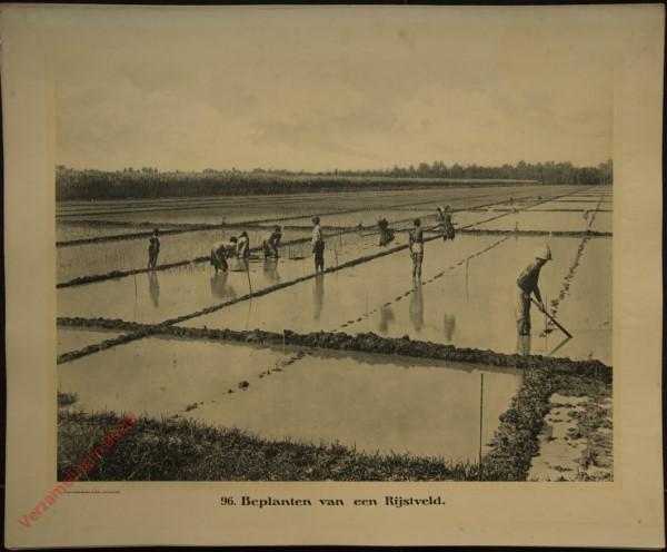 96 - Beplanten van een rijstveld