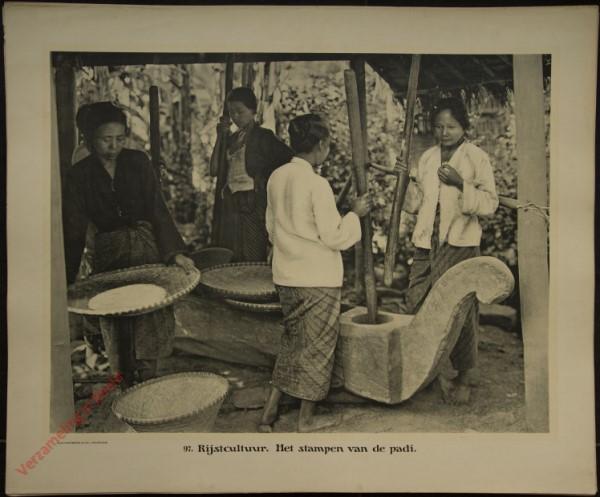 97 - Rijstcultuur. Het stampen van de padi