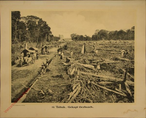 148 - Tabak, gekapt Oerbosch