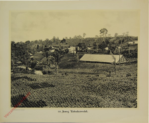 149 - Jong Tabaksveld.