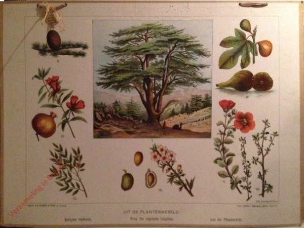 Serie C. V - Uit de Plantenwereld