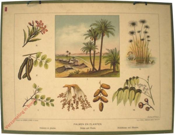 Serie C. VI - Palmen en planten
