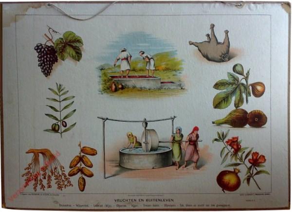 Serie C. 4 - Vruchten en buitenleven
