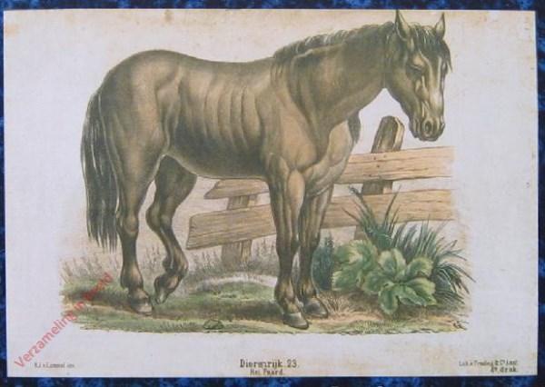 Eerste reeks. No. 23 [1e druk] - Dierenrijk. Het Paard