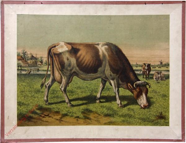 Serie I. No. XIV. [var T1] - De koe. La vache [Rechts twee bruin-wit gevlekte koeien]