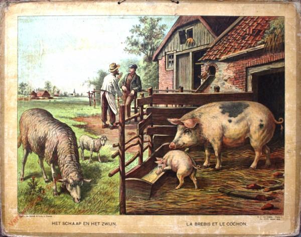 Serie I. No. XVIII. [var T1] - Het schaap en het zwijn. La brebis et le cochon [witte kip loopt omhoog]