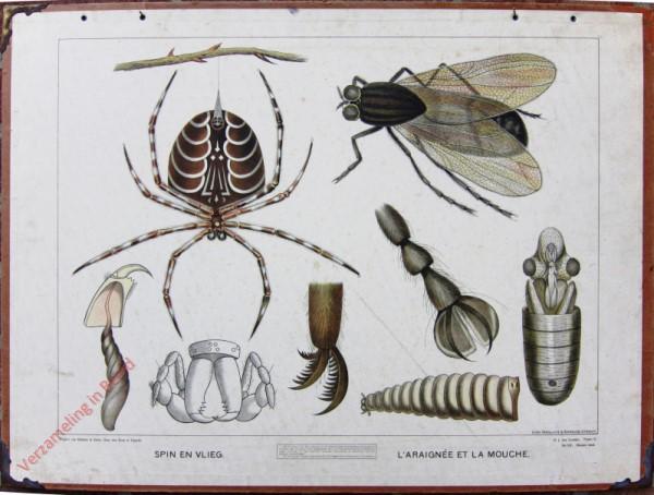 Serie II. No. VII. [var T1] - Spin en vlieg. l'Araignée et la mouche