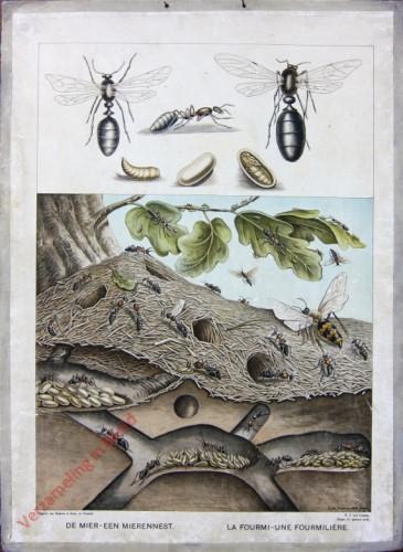 Serie II. No. VIII. [var T1] - De mier - Een mierennest. La Fourmi - La Fourmiliere