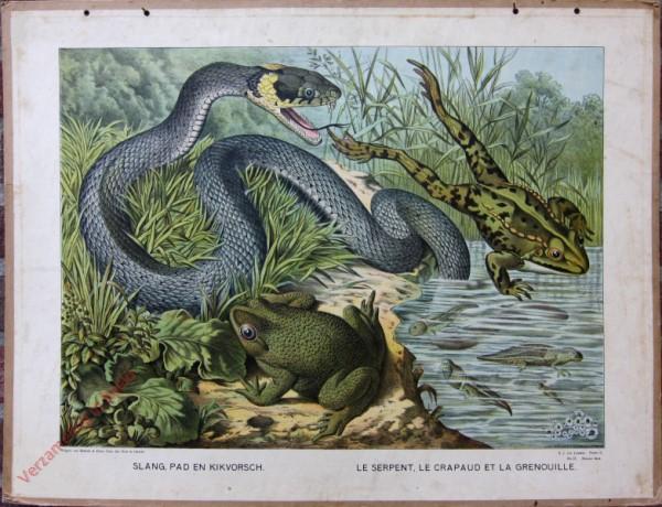 Serie II. No. IX. [var T1] - Slang, Pad, Kikvorsch. Le serpent, le crapago