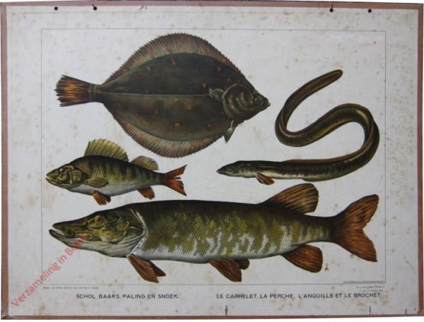 Serie II. No. X. [var T1] - Schol, Baars, Paling en Snoek. Le Carrelet, la Ferche, l'Anguille et le Brochet