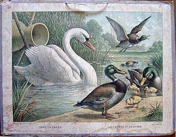 Serie II. No. XIV. [var T1] - Eend en zwaan. Le canard et le cygne