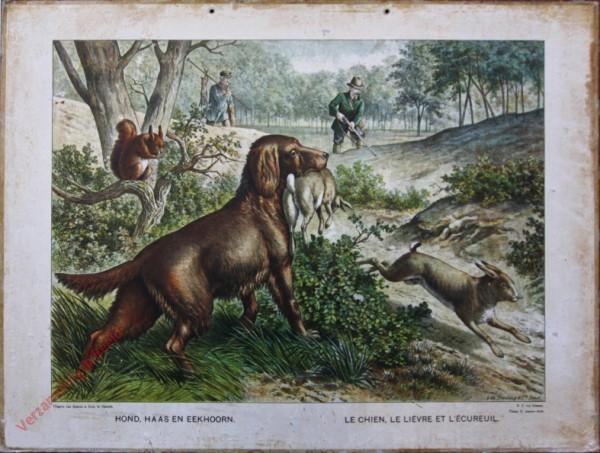 Serie II. No. XVI. [var T1] - Hond, haas en eekhoorn. Le chien, le li�vre et l'�cureuil