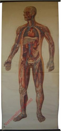 2004 - Hart en bloedsvaten