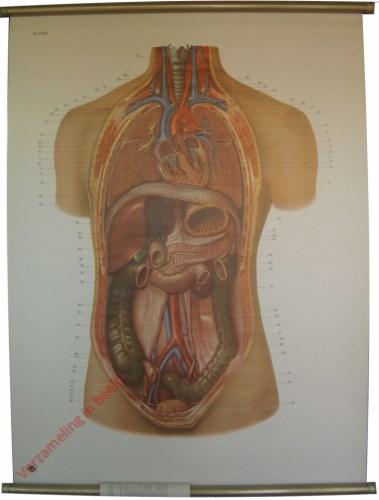 2006 - De inwendige organen van de mens