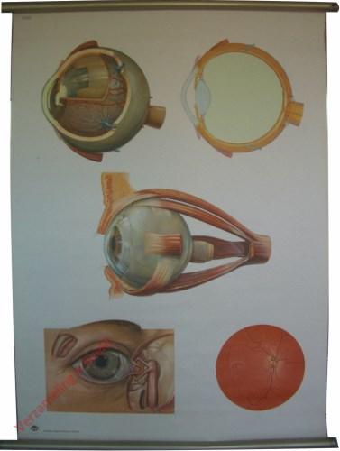 2012/I - Het oog I