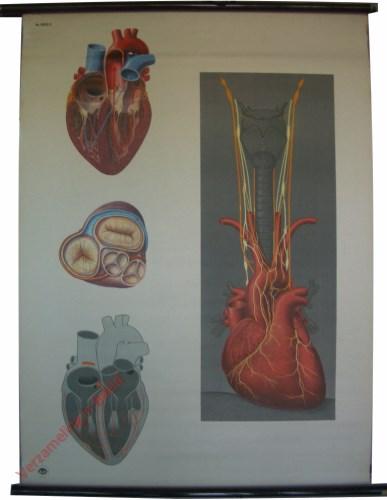 2028 - Het hart