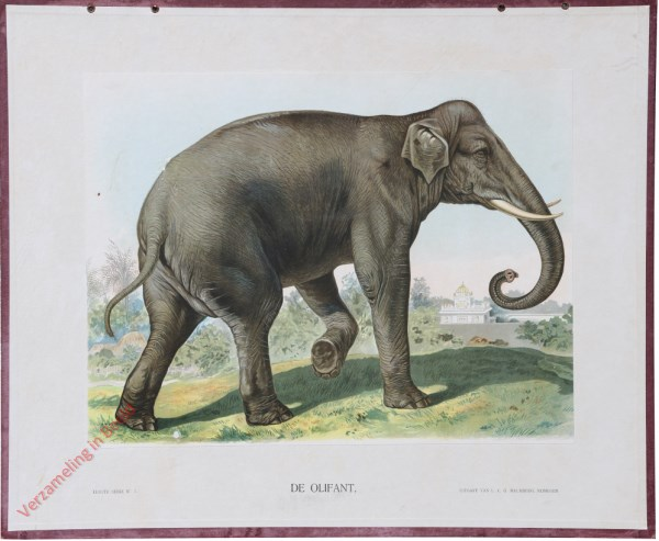 VII - De olifant
