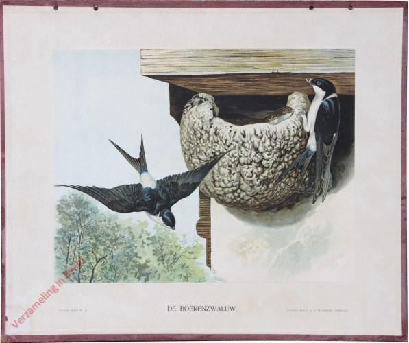XI - De Boerenzwaluw