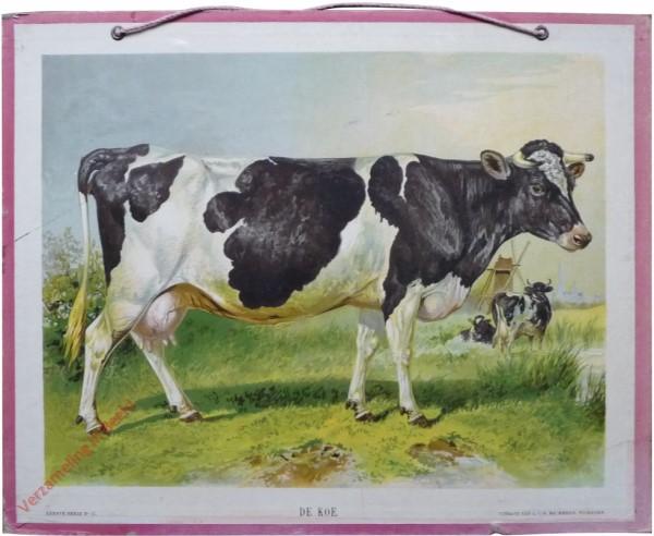 XVII - De Koe