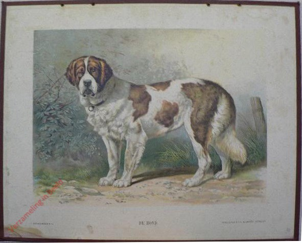 XVIII - De Hond