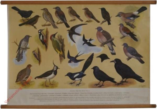 1 - Vogels bij ons Huis [I]