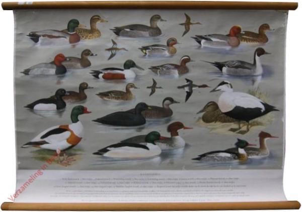 5 - Watervogels