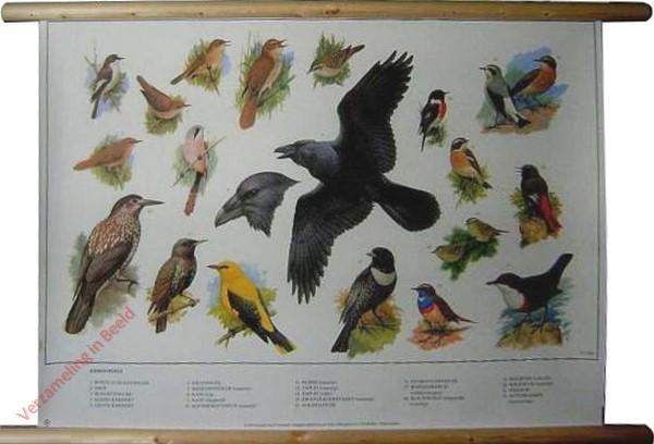 6 [Nieuwe uitgave] - Zangvogels (1)