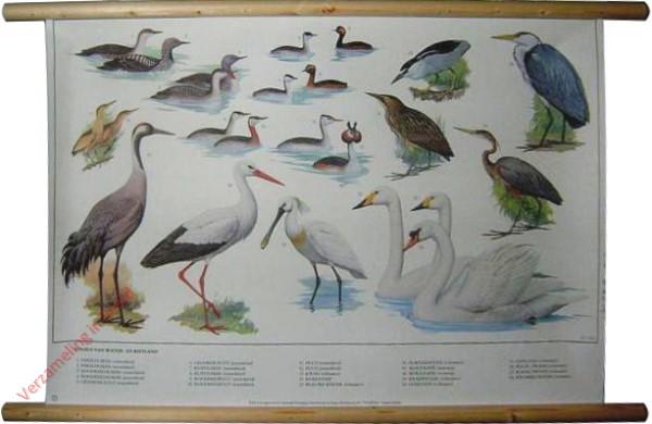 7 [Nieuwe uitgave] - Vogels van Water en Rietland