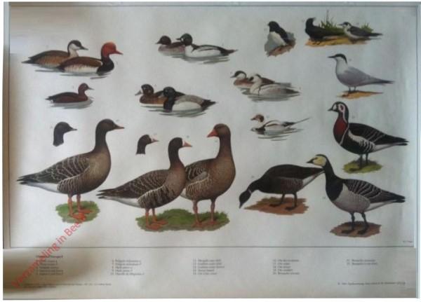 8 [Nieuwe uitgave] - Watervogels (2)