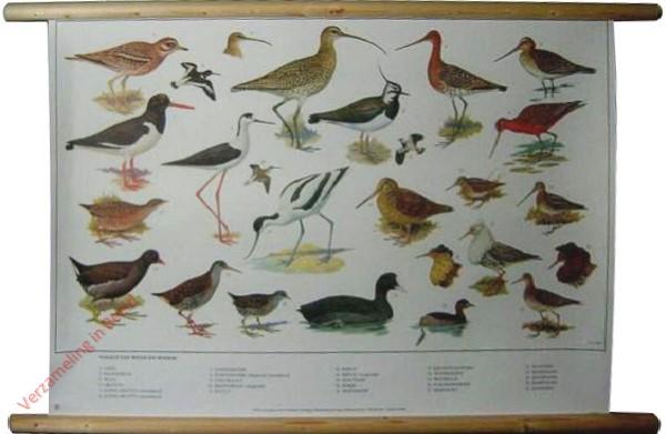 9 [Nieuwe uitgave] - Vogels van Weide en Moeras