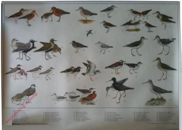 10 [Nieuwe uitgave] - Vogels van Wad en Kust