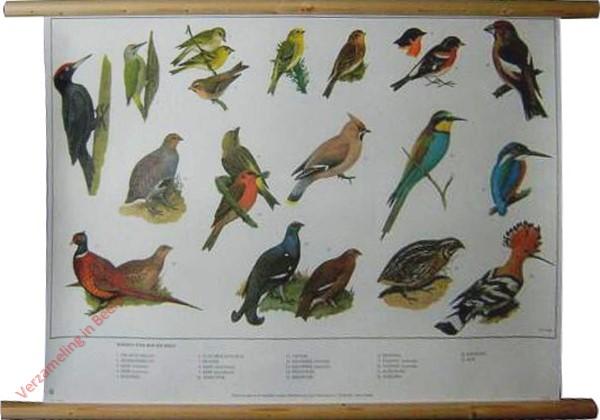 12 [Nieuwe uitgave] - Vogels van Bos en Veld