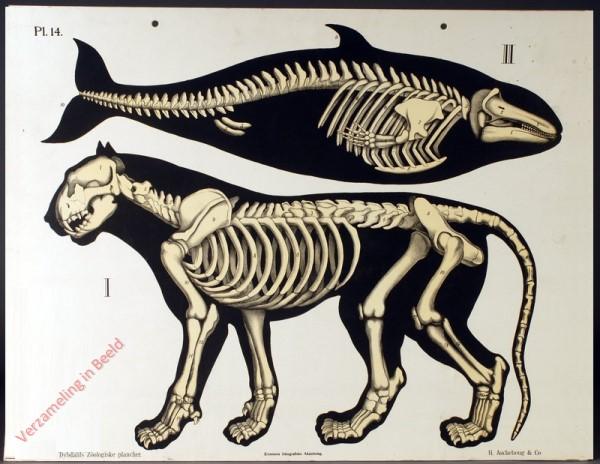 14 - Geraamten (Leeuw, Dolfijn)