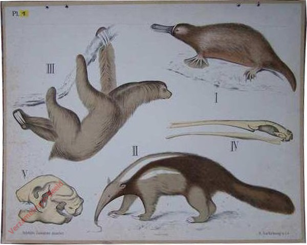 18 - Tandarme dieren en Cloacadieren